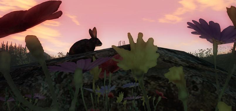 Nueva Especie 2014_05_rabbit_3