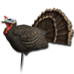 decoy_turkey_male_01_256