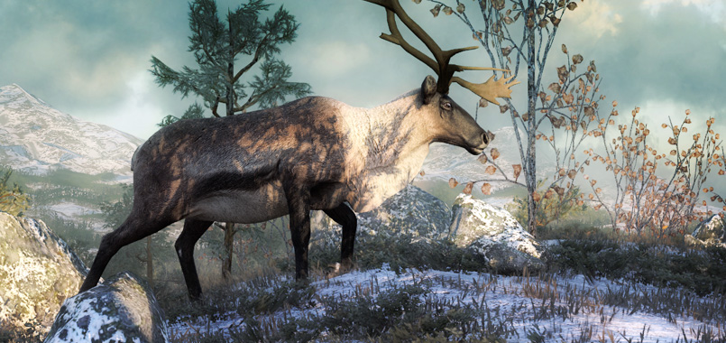 2014_08_reindeer_release.jpg