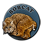bobcat_achievement