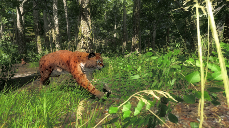 screenshot_bobcat_sprint_1