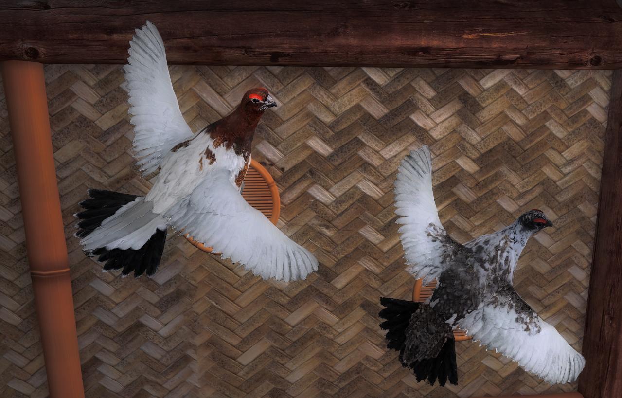 birdpose_03