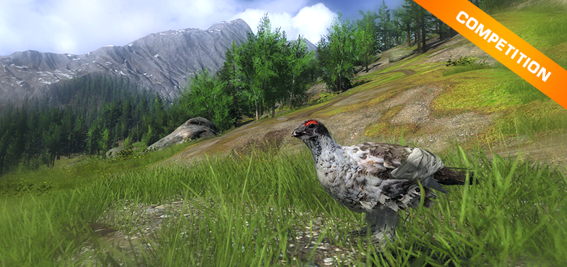THC_competition_rock_ptarmigan_805x380
