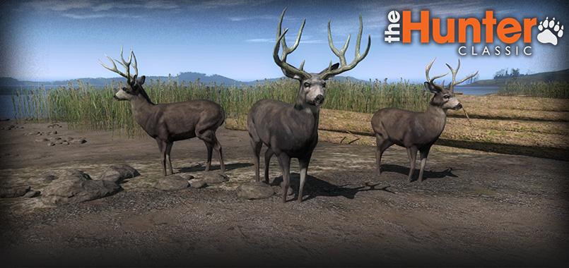 deer_april_kings_challenge_homepage